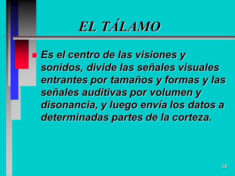 39 EL TÁLAMO n Es el centro de las visiones y sonidos, divide las señales visuales entrantes por tamaños y formas y las señales auditivas por volumen