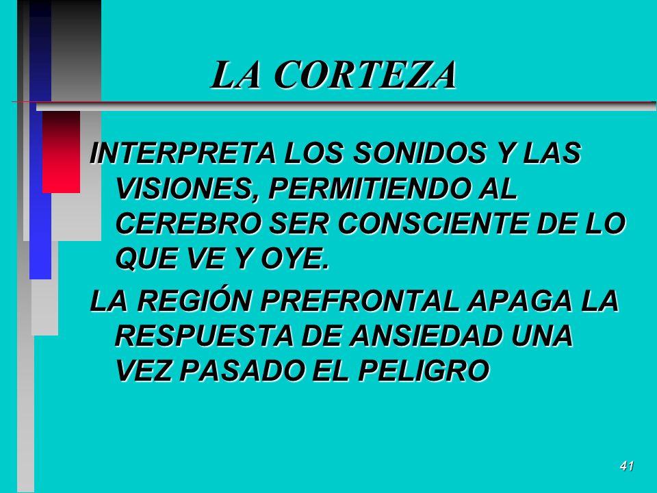 41 LA CORTEZA INTERPRETA LOS SONIDOS Y LAS VISIONES, PERMITIENDO AL CEREBRO SER CONSCIENTE DE LO QUE VE Y OYE.
