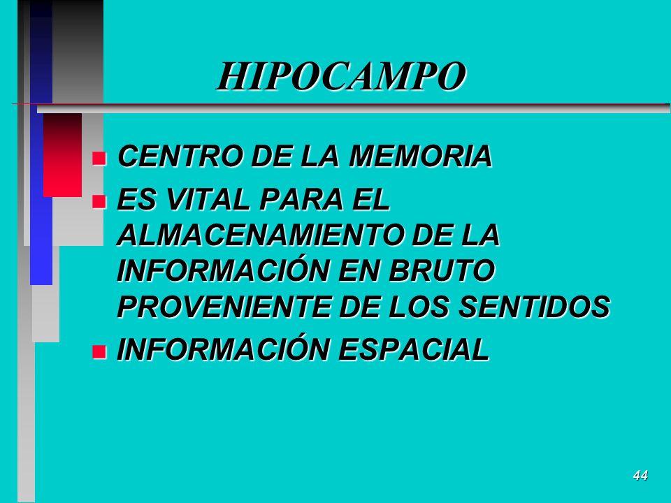 44 HIPOCAMPO n CENTRO DE LA MEMORIA n ES VITAL PARA EL ALMACENAMIENTO DE LA INFORMACIÓN EN BRUTO PROVENIENTE DE LOS SENTIDOS n INFORMACIÓN ESPACIAL