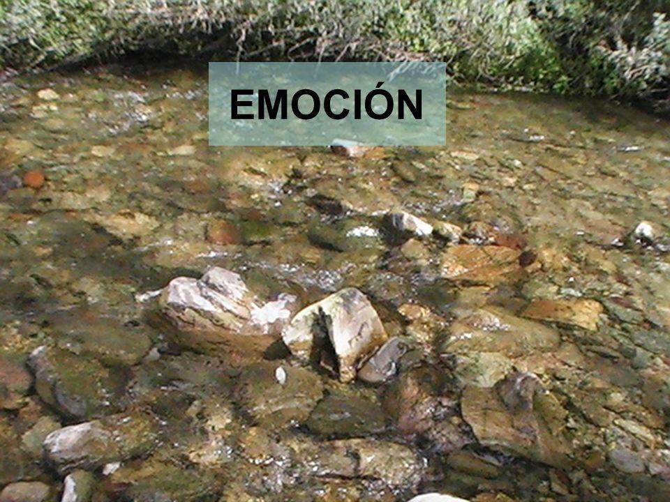 7 EMOCIÓN