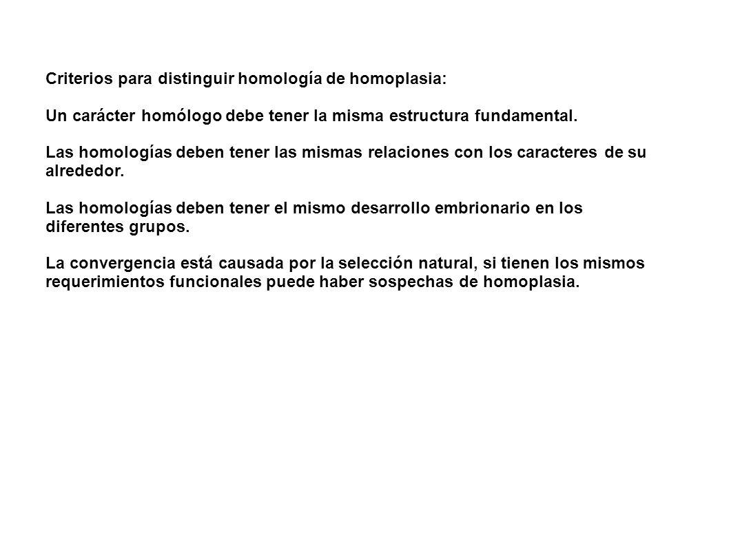 Criterios para distinguir homología de homoplasia: Un carácter homólogo debe tener la misma estructura fundamental. Las homologías deben tener las mis