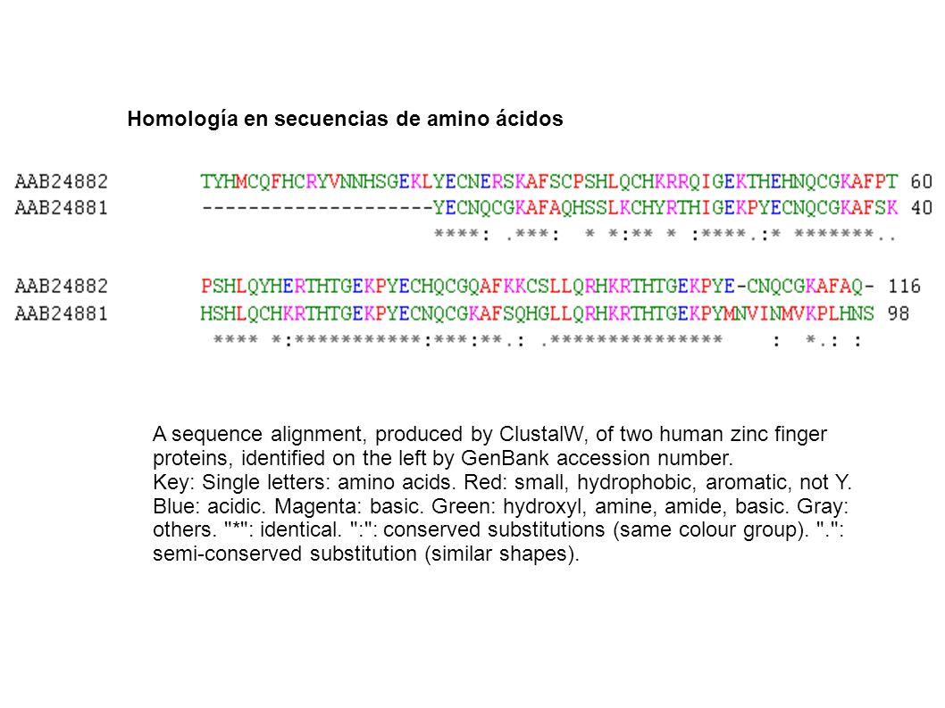 Homología en secuencias de amino ácidos A sequence alignment, produced by ClustalW, of two human zinc finger proteins, identified on the left by GenBa