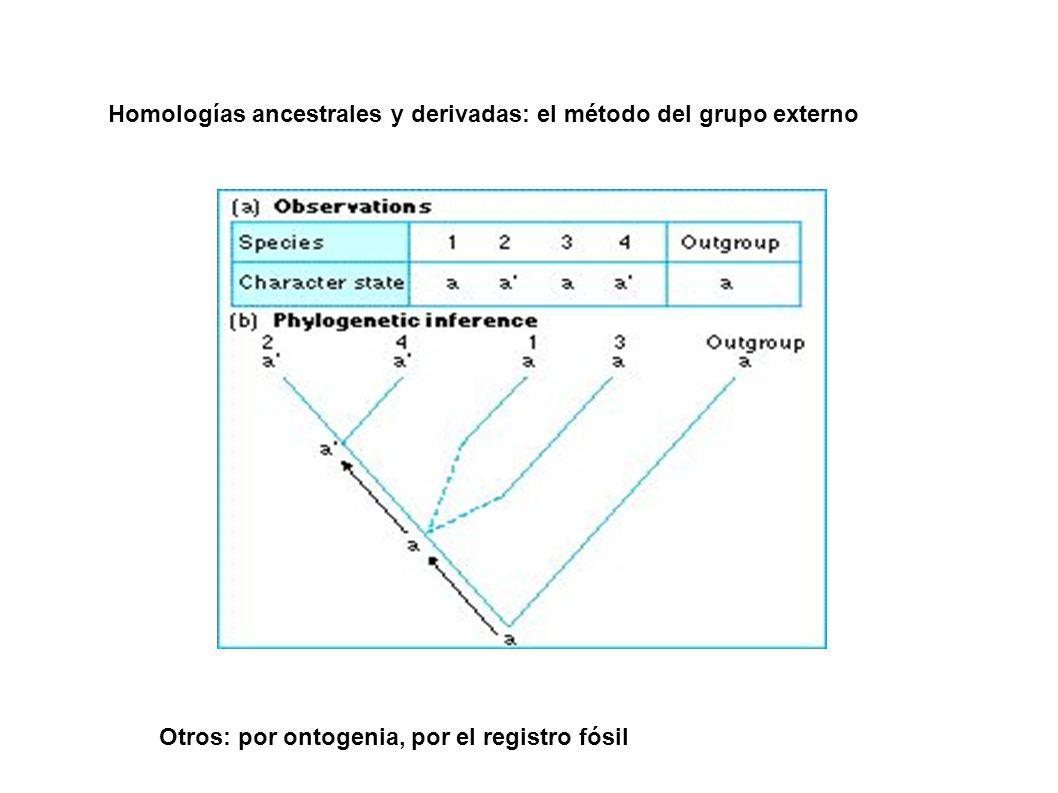 Homologías ancestrales y derivadas: el método del grupo externo Otros: por ontogenia, por el registro fósil