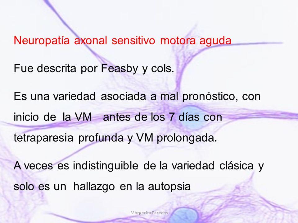 Margarita Paredes Neuropatía axonal sensitivo motora aguda Fue descrita por Feasby y cols. Es una variedad asociada a mal pronóstico, con inicio de la
