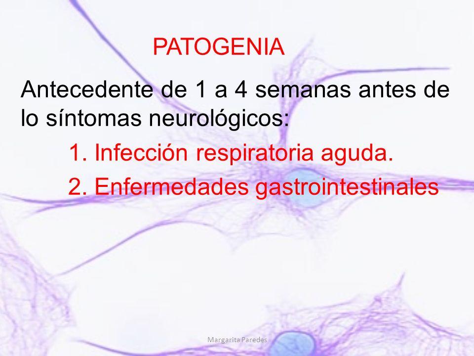 Margarita Paredes PATOGENIA Antecedente de 1 a 4 semanas antes de lo síntomas neurológicos: 1. Infección respiratoria aguda. 2. Enfermedades gastroint