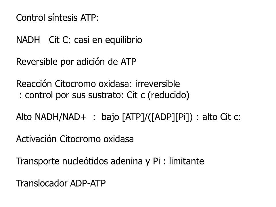 Control síntesis ATP: NADH Cit C: casi en equilibrio Reversible por adición de ATP Reacción Citocromo oxidasa: irreversible : control por sus sustrato