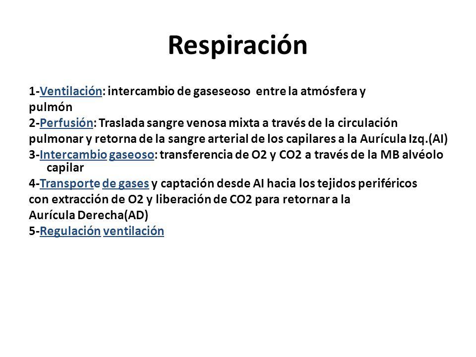 Respiración 1-Ventilación: intercambio de gaseseoso entre la atmósfera y pulmón 2-Perfusión: Traslada sangre venosa mixta a través de la circulación p