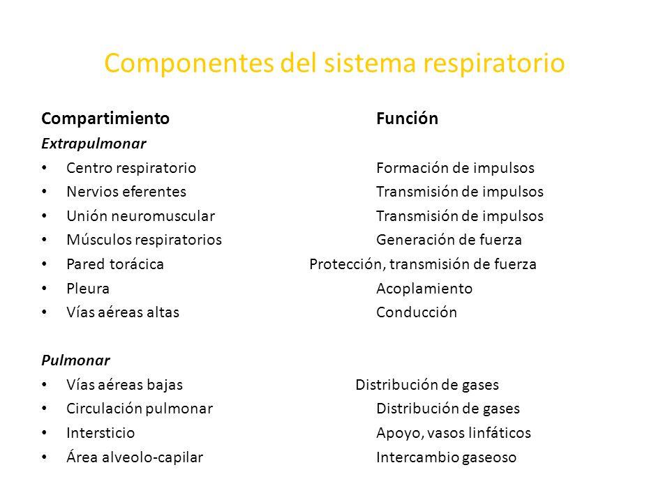 Componentes del sistema respiratorio Compartimiento Función Extrapulmonar Centro respiratorio Formación de impulsos Nervios eferentes Transmisión de i