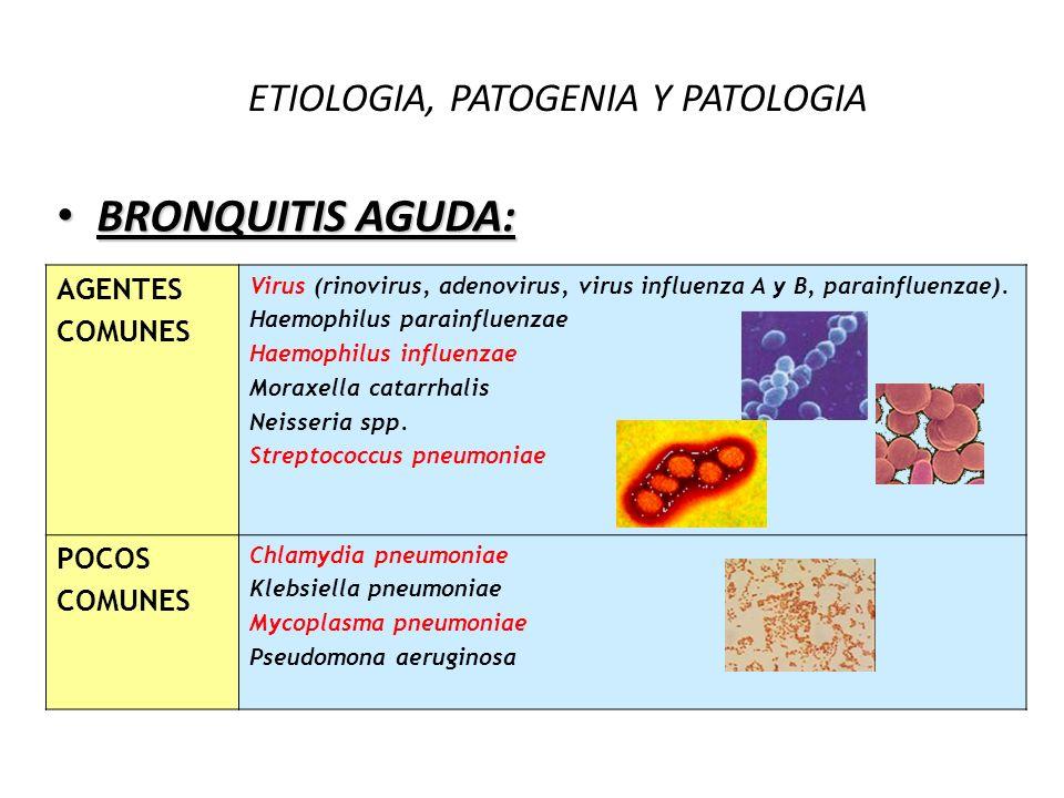 ETIOLOGIA, PATOGENIA Y PATOLOGIA BRONQUITIS AGUDA: BRONQUITIS AGUDA: AGENTES COMUNES Virus (rinovirus, adenovirus, virus influenza A y B, parainfluenz