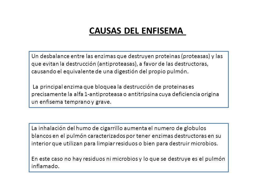 BRONQUITIS AGUDA: BRONQUITIS AGUDA: Desarrollo de tos, con o sin expectoración, que se presenta durante el curso de una infección viral aguda.