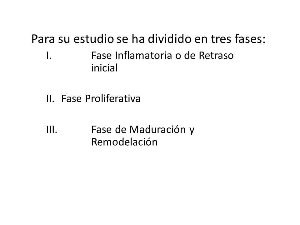 CICATRIZACION Para su estudio se ha dividido en tres fases: I.Fase Inflamatoria o de Retraso inicial II.Fase Proliferativa III.Fase de Maduración y Re