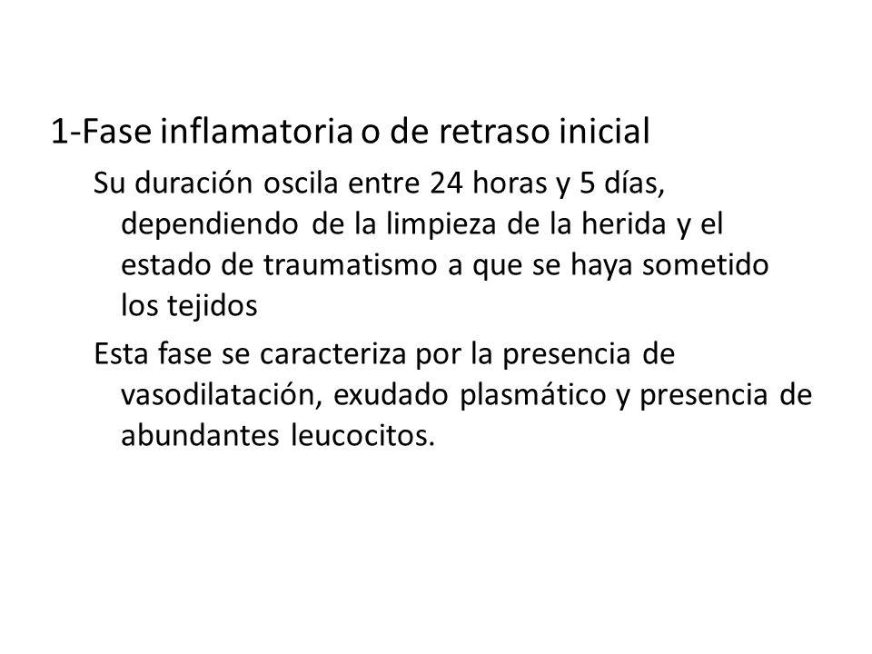 CICATRIZACION 1-Fase inflamatoria o de retraso inicial Su duración oscila entre 24 horas y 5 días, dependiendo de la limpieza de la herida y el estado
