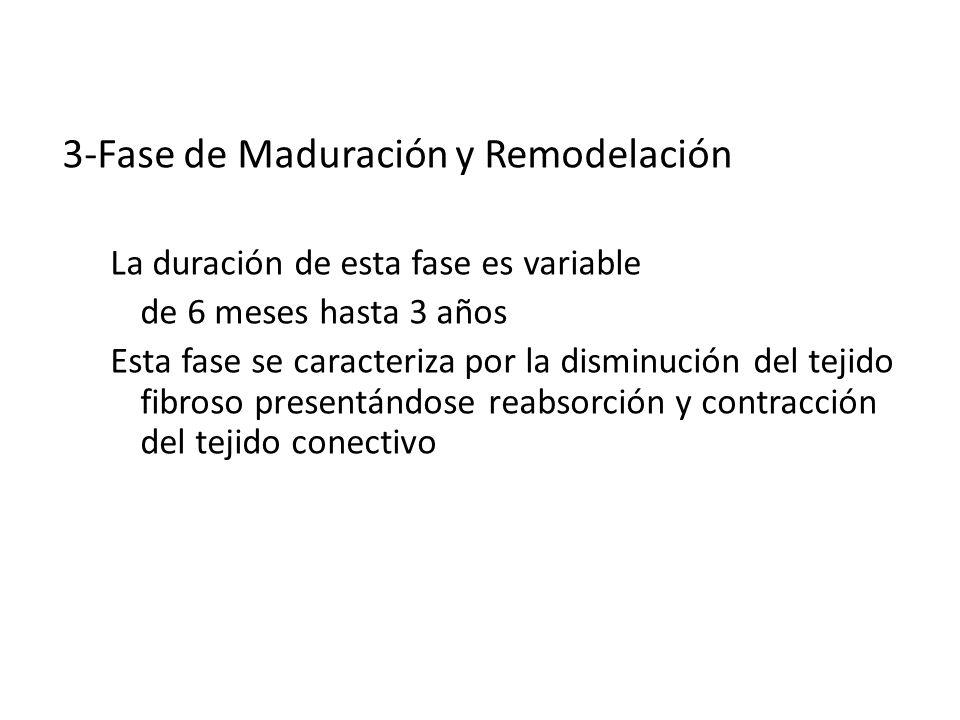 CICATRIZACION 3-Fase de Maduración y Remodelación La duración de esta fase es variable de 6 meses hasta 3 años Esta fase se caracteriza por la disminu