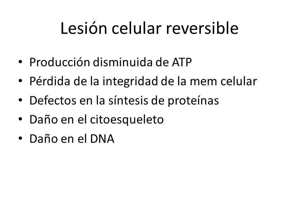 Lesión celular reversible Producción disminuida de ATP Pérdida de la integridad de la mem celular Defectos en la síntesis de proteínas Daño en el cito