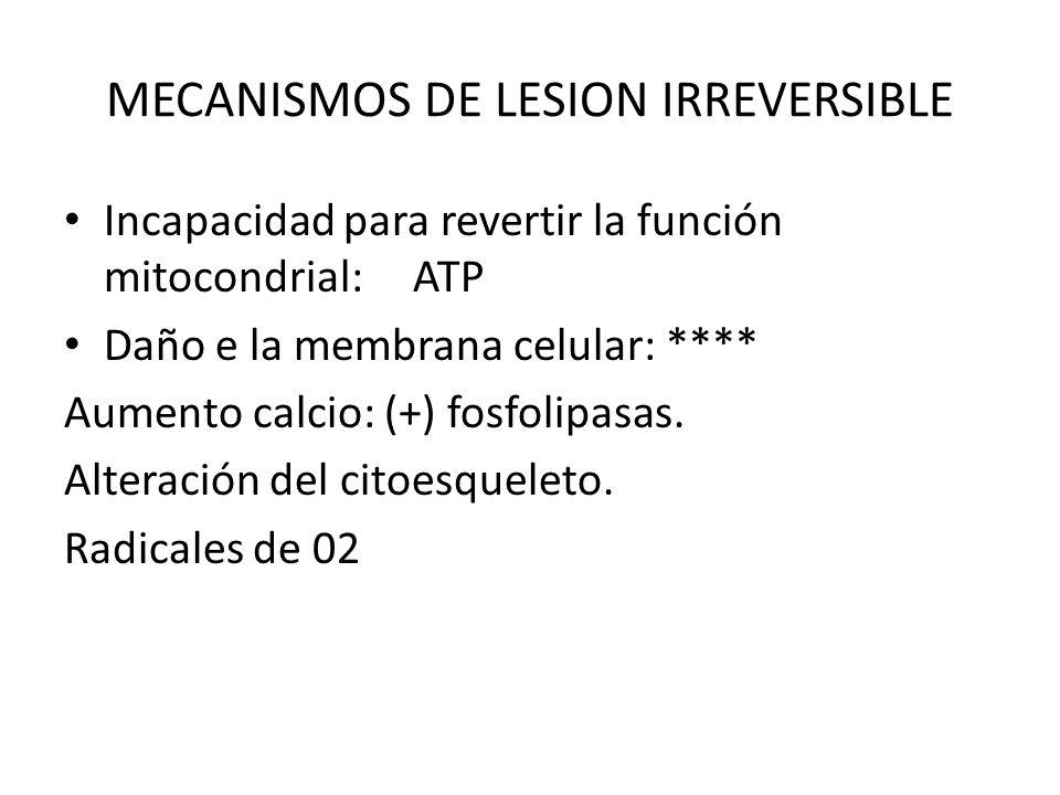 MECANISMOS DE LESION IRREVERSIBLE Incapacidad para revertir la función mitocondrial: ATP Daño e la membrana celular: **** Aumento calcio: (+) fosfolip