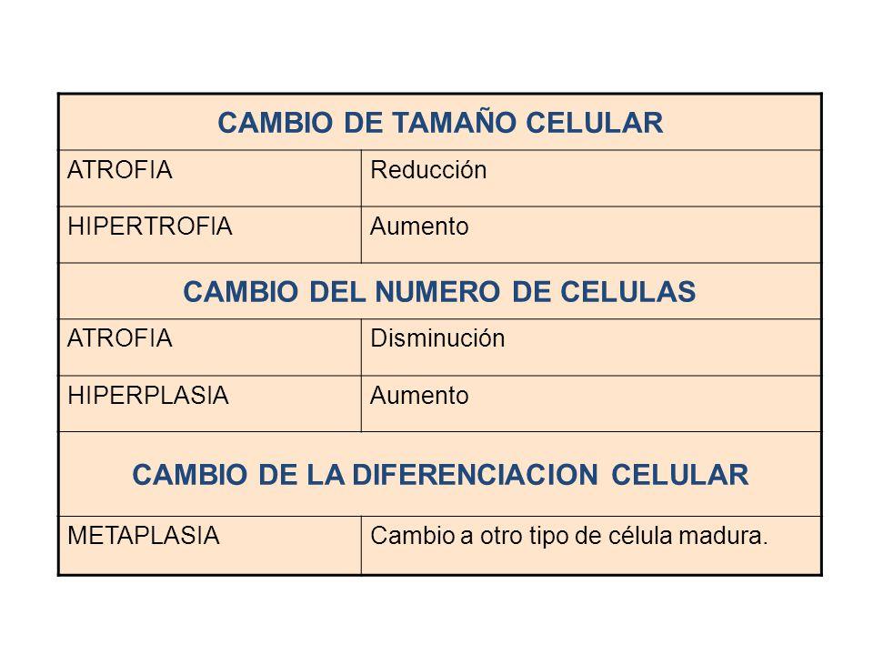 CAMBIO DE TAMAÑO CELULAR ATROFIAReducción HIPERTROFIAAumento CAMBIO DEL NUMERO DE CELULAS ATROFIADisminución HIPERPLASIAAumento CAMBIO DE LA DIFERENCI