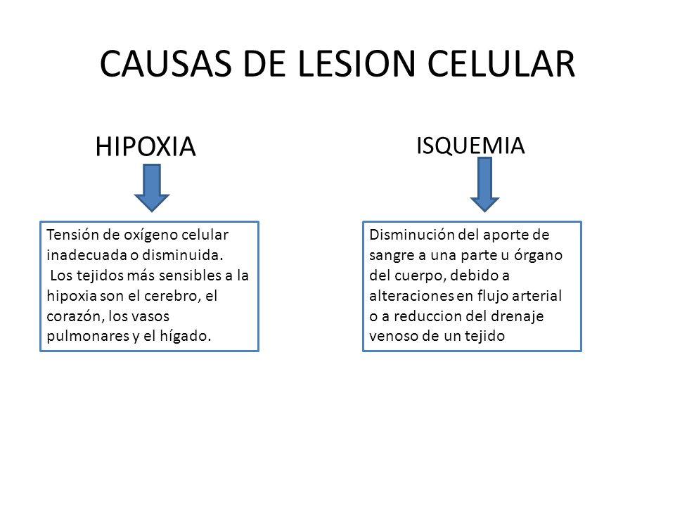 CAUSAS DE LESION CELULAR HIPOXIA Tensión de oxígeno celular inadecuada o disminuida. Los tejidos más sensibles a la hipoxia son el cerebro, el corazón