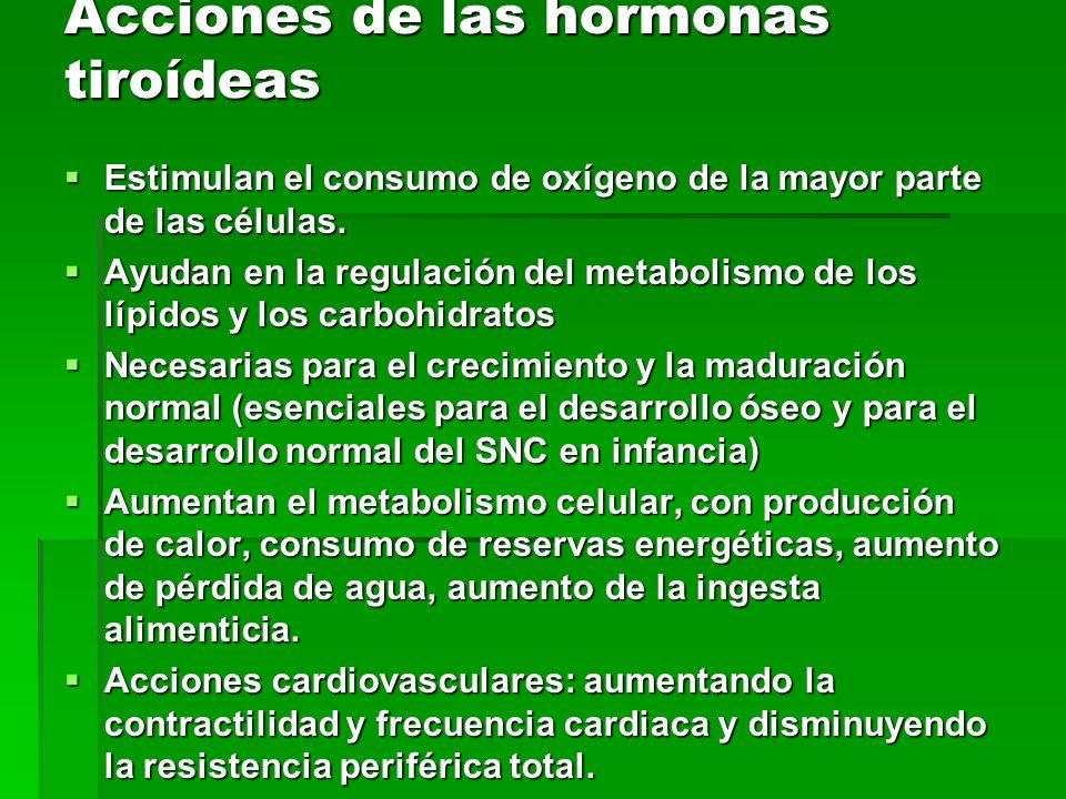 Acciones de las hormonas tiroídeas Estimulan el consumo de oxígeno de la mayor parte de las células. Estimulan el consumo de oxígeno de la mayor parte