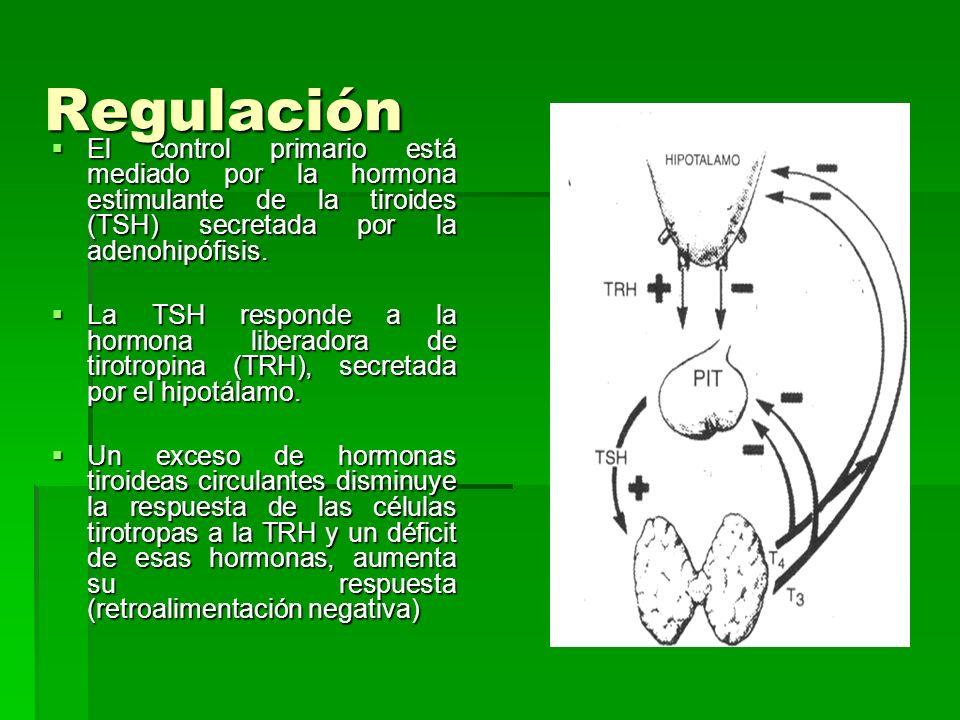 Regulación El control primario está mediado por la hormona estimulante de la tiroides (TSH) secretada por la adenohipófisis. El control primario está