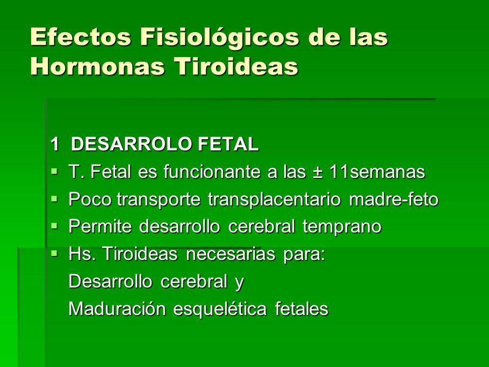 Efectos Fisiológicos de las Hormonas Tiroideas 1 DESARROLO FETAL T. Fetal es funcionante a las ± 11semanas T. Fetal es funcionante a las ± 11semanas P
