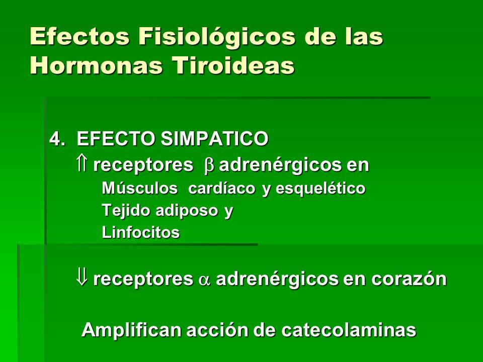 Efectos Fisiológicos de las Hormonas Tiroideas 4. EFECTO SIMPATICO receptores adrenérgicos en receptores adrenérgicos en Músculos cardíaco y esqueléti
