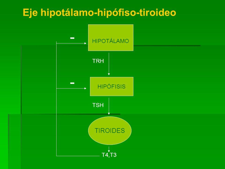 HIPOTÁLAMO HIPÓFISIS TIROIDES TRH TSH T4,T3 - - Eje hipotálamo-hipófiso-tiroideo