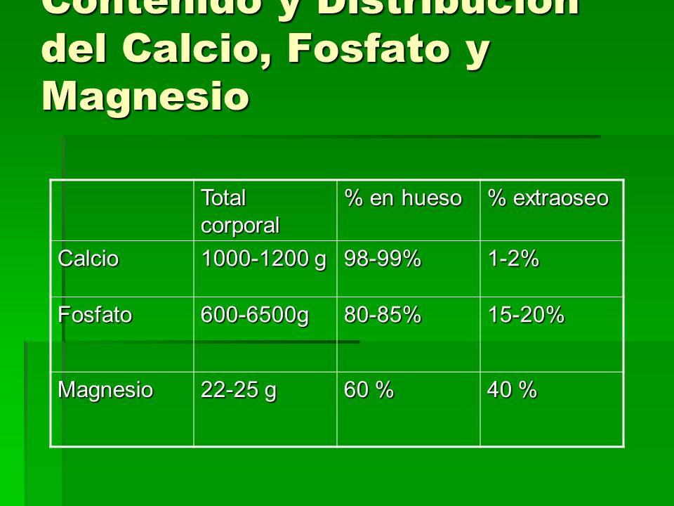 Contenido y Distribución del Calcio, Fosfato y Magnesio Total corporal % en hueso % extraoseo Calcio 1000-1200 g 98-99%1-2% Fosfato600-6500g80-85%15-2