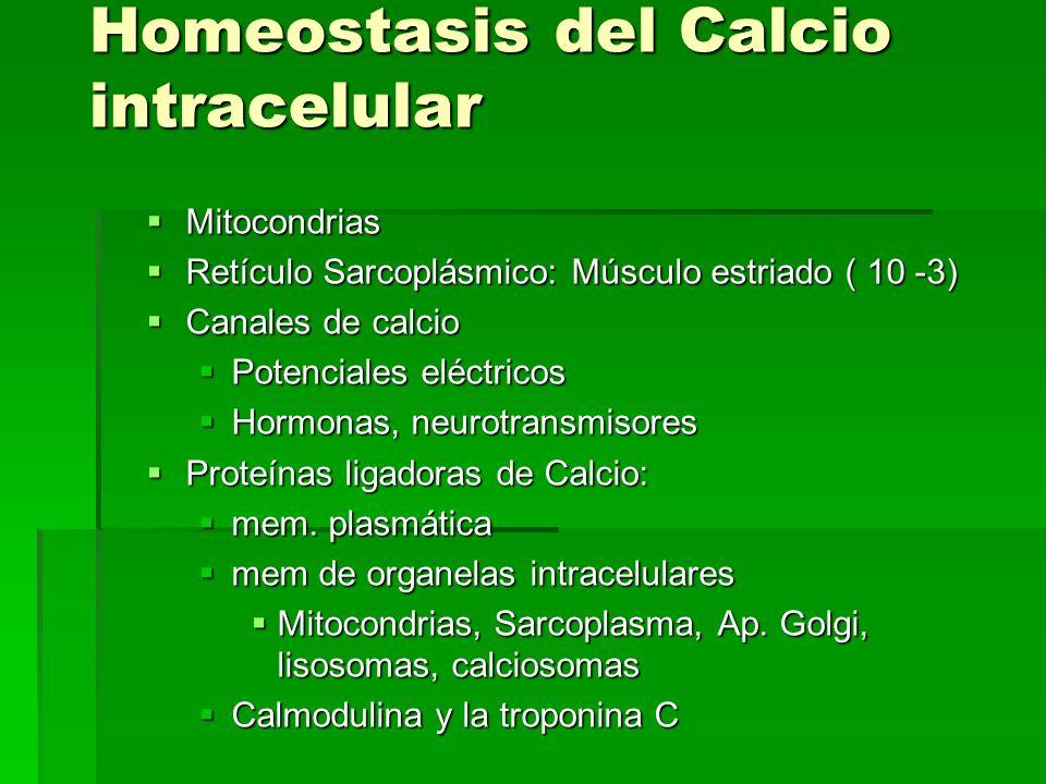 Homeostasis del Calcio intracelular Mitocondrias Mitocondrias Retículo Sarcoplásmico: Músculo estriado ( 10 -3) Retículo Sarcoplásmico: Músculo estria