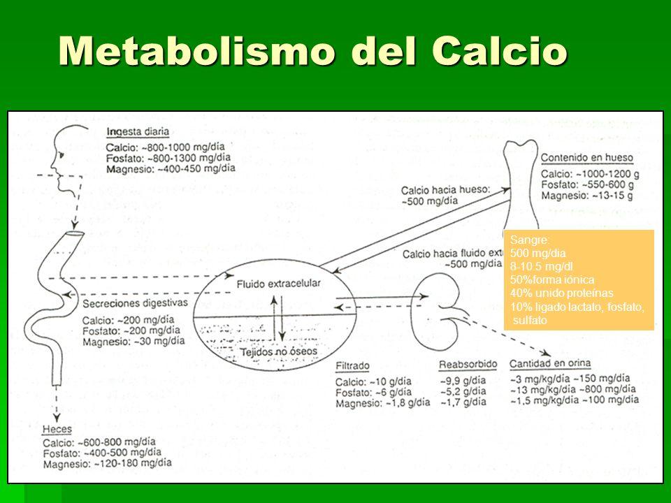 Metabolismo del Calcio Sangre: 500 mg/dia 8-10.5 mg/dl 50%forma iónica 40% unido proteínas 10% ligado lactato, fosfato, sulfato