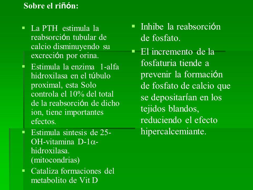 Sobre el ri ñó n: La PTH estimula la reabsorci ó n tubular de calcio disminuyendo su excreci ó n por orina. Estimula la enzima 1-alfa hidroxilasa en e