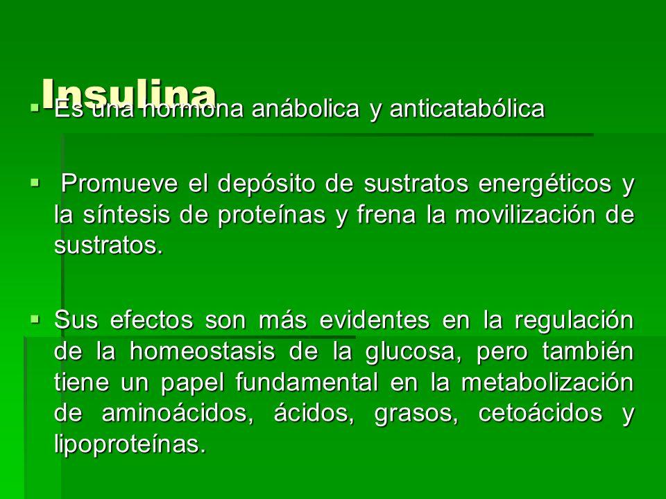 Insulina Es una hormona anábolica y anticatabólica Es una hormona anábolica y anticatabólica Promueve el depósito de sustratos energéticos y la síntes