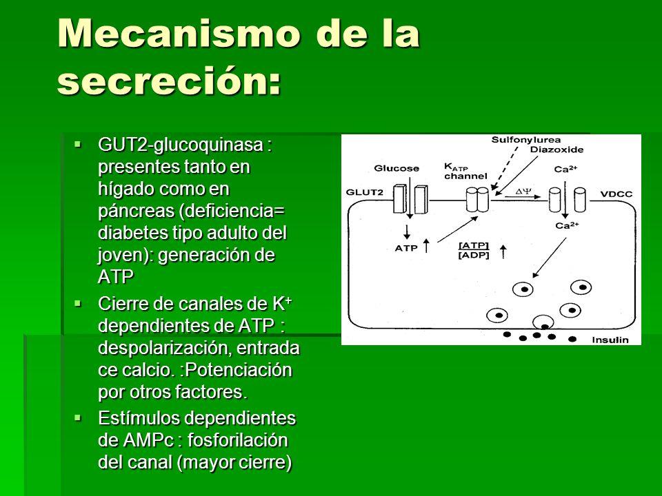Mecanismo de la secreción: GUT2-glucoquinasa : presentes tanto en hígado como en páncreas (deficiencia= diabetes tipo adulto del joven): generación de