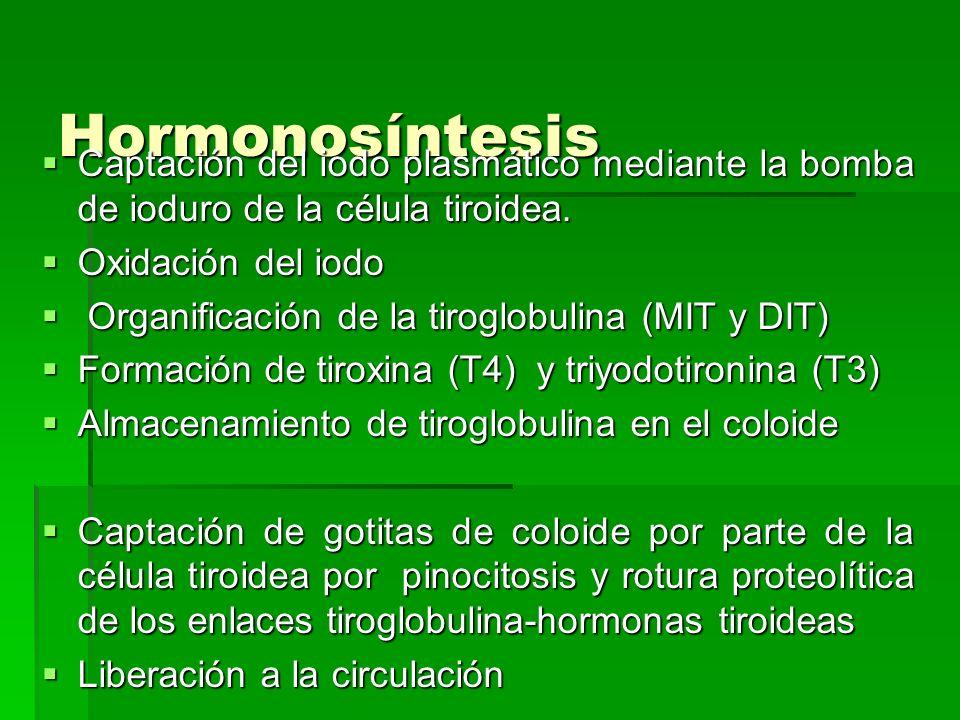 Hormonosíntesis Captación del iodo plasmático mediante la bomba de ioduro de la célula tiroidea. Captación del iodo plasmático mediante la bomba de io