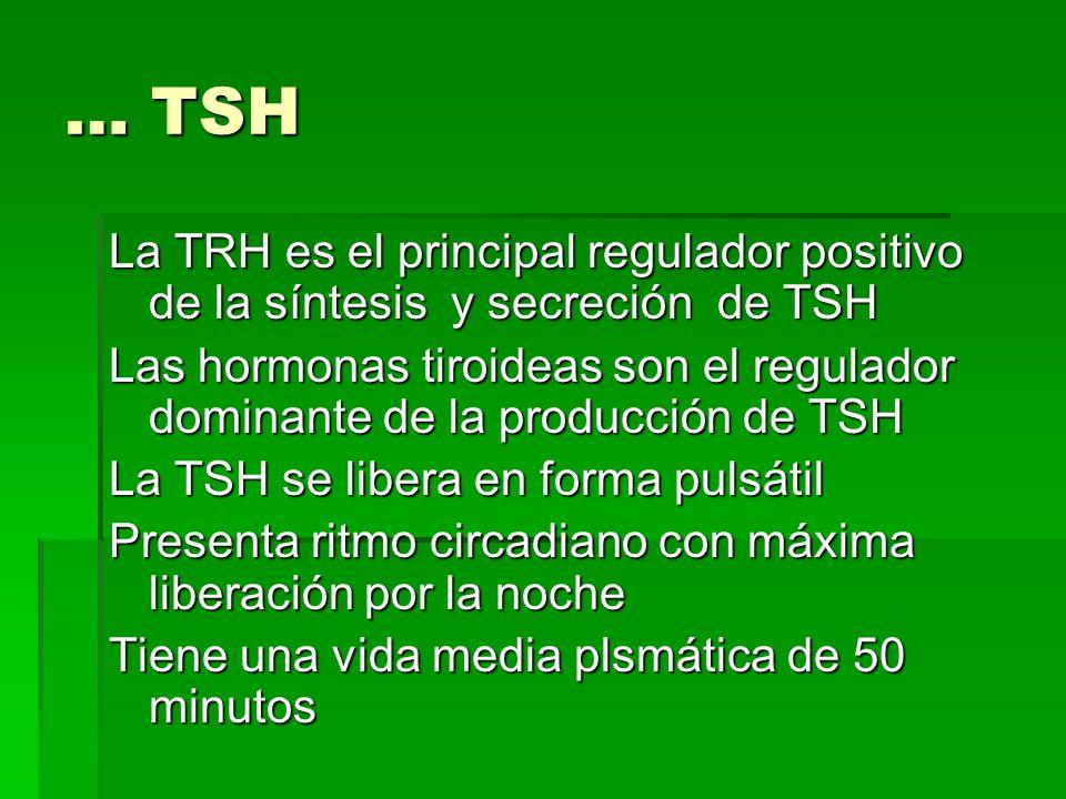 … TSH La TRH es el principal regulador positivo de la síntesis y secreción de TSH Las hormonas tiroideas son el regulador dominante de la producción d