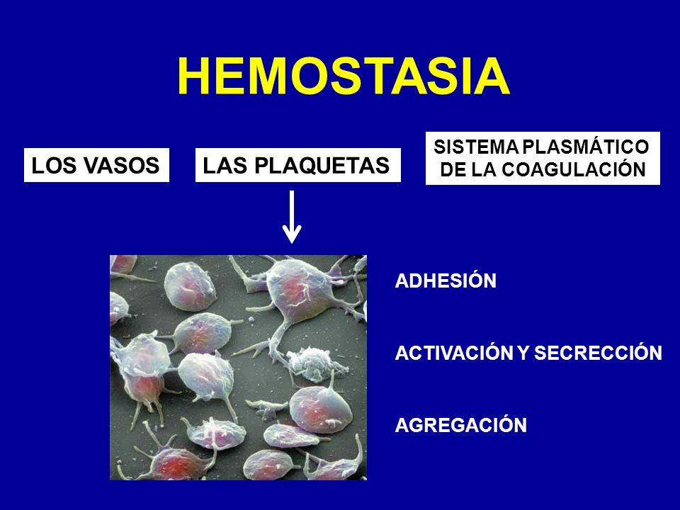 HEMOSTASIA LOS VASOSLAS PLAQUETAS SISTEMA PLASMÁTICO DE LA COAGULACIÓN ADHESIÓN ACTIVACIÓN Y SECRECCIÓN AGREGACIÓN