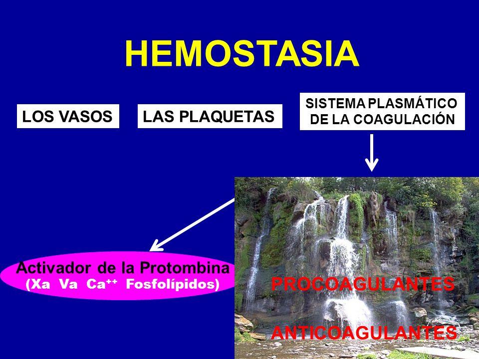 HEMOSTASIA LOS VASOSLAS PLAQUETAS SISTEMA PLASMÁTICO DE LA COAGULACIÓN Activador de la Protombina PROCOAGULANTES ANTICOAGULANTES (Xa Va Ca ++ Fosfolíp