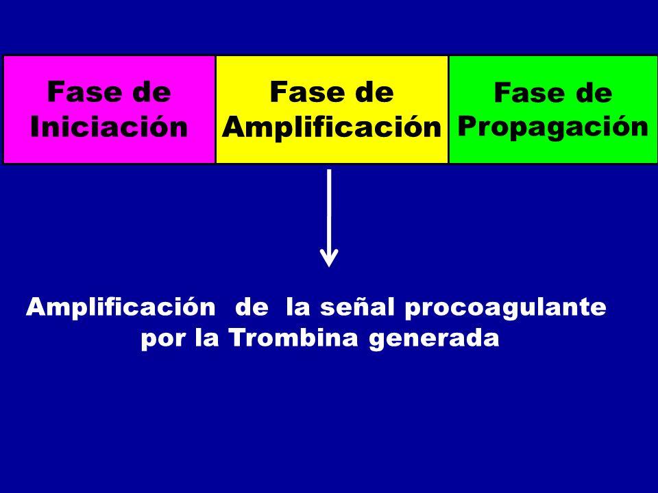 Fase de Iniciación Fase de Amplificación Fase de Propagación Amplificación de la señal procoagulante por la Trombina generada
