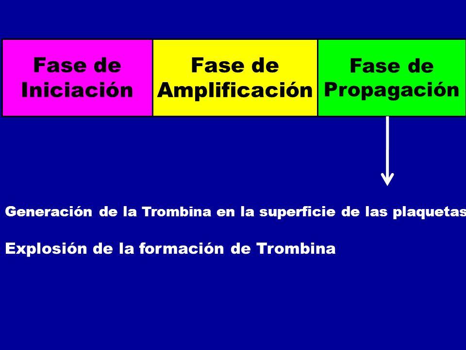 Fase de Iniciación Fase de Amplificación Fase de Propagación Generación de la Trombina en la superficie de las plaquetas Explosión de la formación de