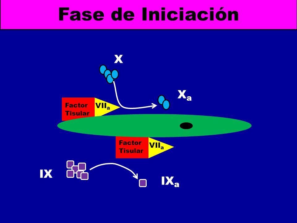 Factor Tisular VII a Fase de Iniciación Factor Tisular VII a X XaXa IX a IX