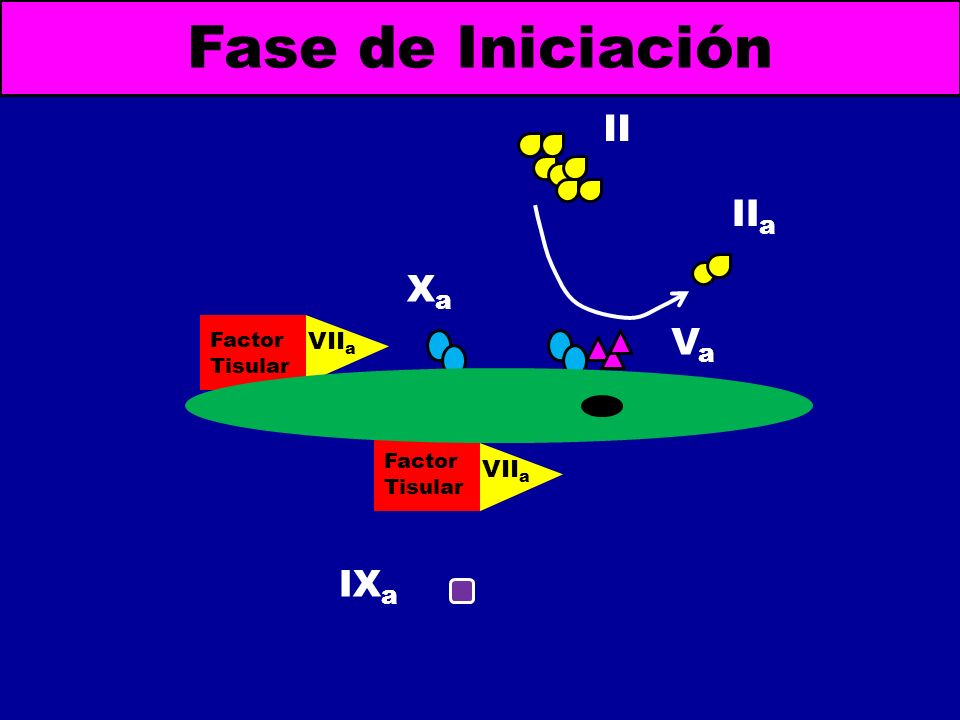 Factor Tisular VII a Fase de Iniciación Factor Tisular VII a XaXa IX a VaVa II II a