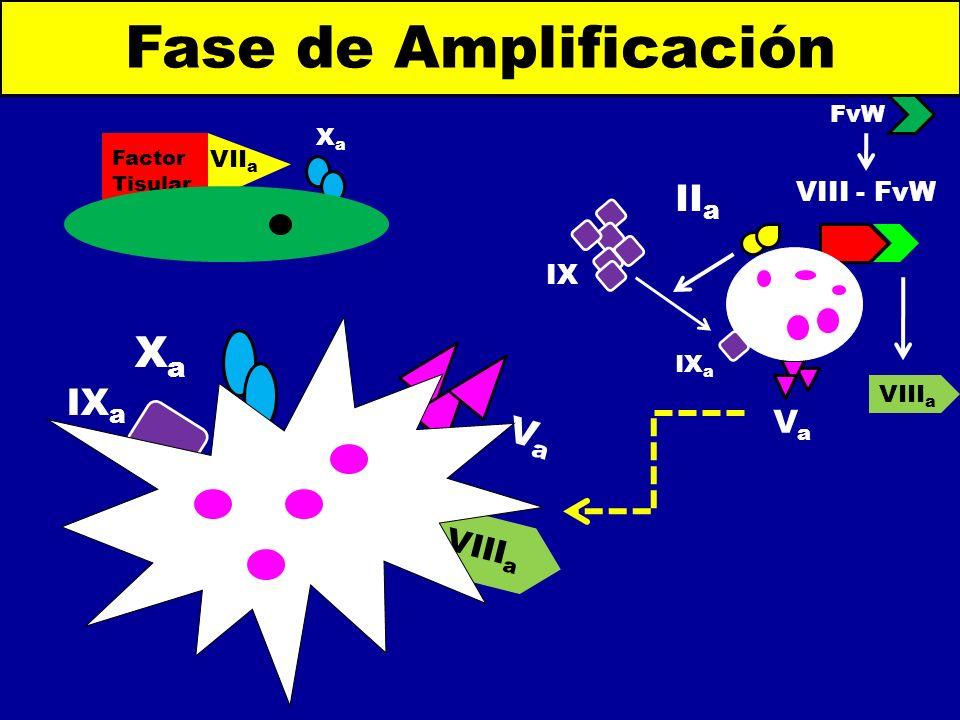 VaVa II a IX a IX VIII - FvW FvW Fase de Amplificación Factor Tisular VII a XaXa VIII a VaVa IX a XaXa