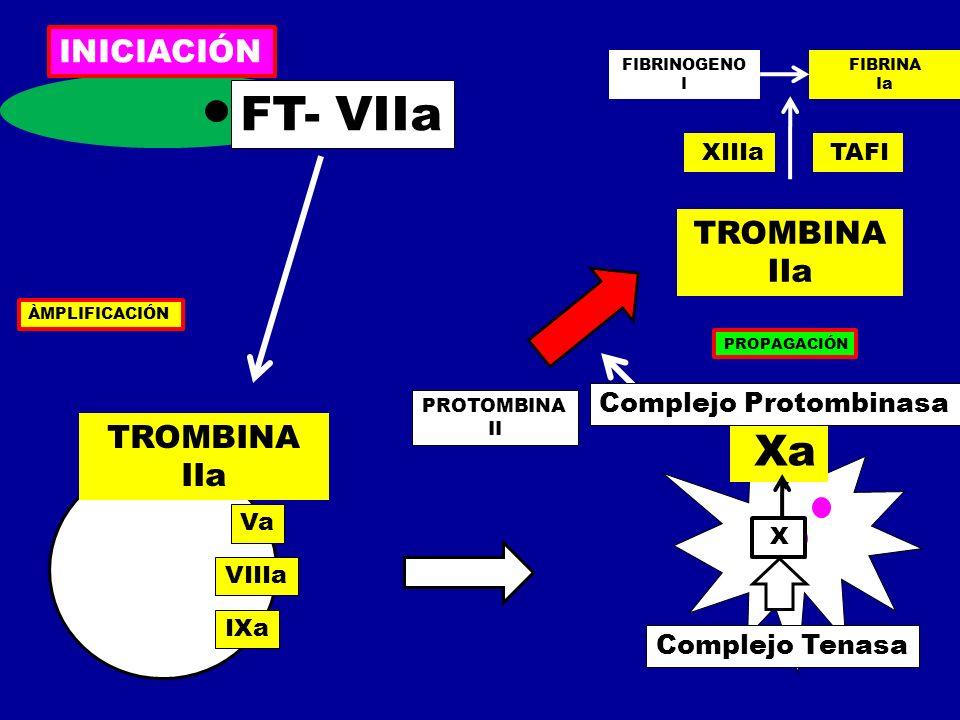 Xa X PROTOMBINA II TROMBINA IIa FIBRINOGENO I FIBRINA Ia XIIIa TAFI INICIACIÓN PROPAGACIÓN ÀMPLIFICACIÓN TROMBINA IIa FT- VIIa Va VIIIa IXa Complejo T