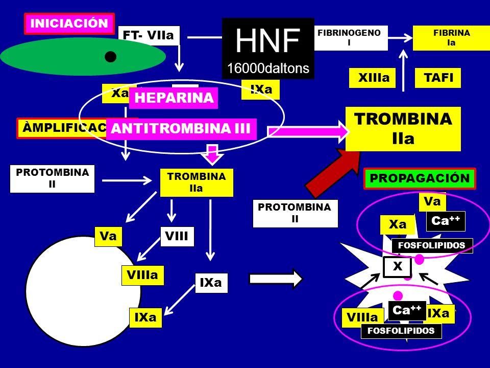 Xa FT- VIIa IX X IXa PROTOMBINA II TROMBINA IIa Va VIIIa IXa VIII IXa Xa Va X PROTOMBINA II TROMBINA IIa FIBRINOGENO I FIBRINA Ia XIIIa TAFI INICIACIÓ