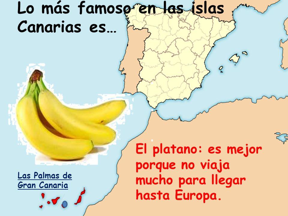 Lo más famoso en las islas Canarias es… El platano: es mejor porque no viaja mucho para llegar hasta Europa. Las Palmas de Gran Canaria