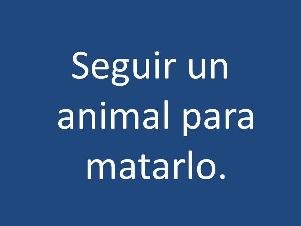 Seguir un animal para matarlo.