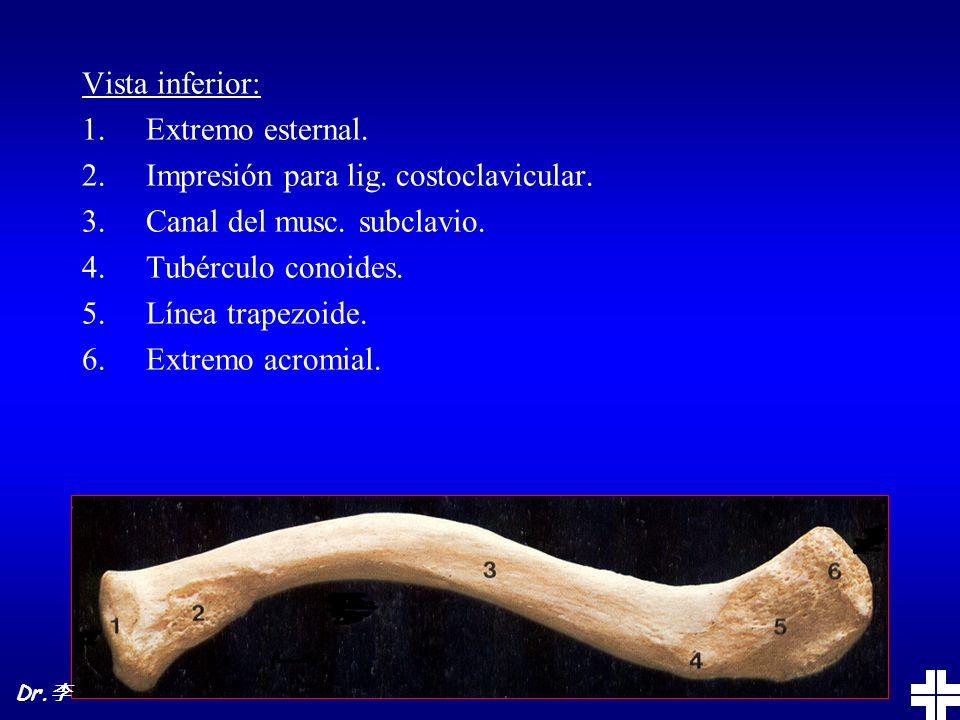 Anatomía: Artic. acromioclavicular Lig. acromioclavicular Lig. conoides Lig. trapezoides Dr.