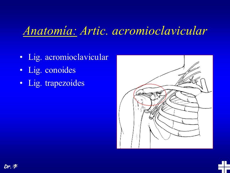 Anatomía: Artic.esternocostoclavicular Lig. anterior Lig.