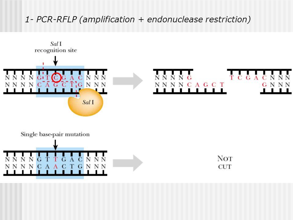 Estrategias para caracterización de mutaciones en FC: 1- PCR-RFLP (amplification + endonuclease restriction) 2- Mutagénesis Dirigida (Mutation mediate