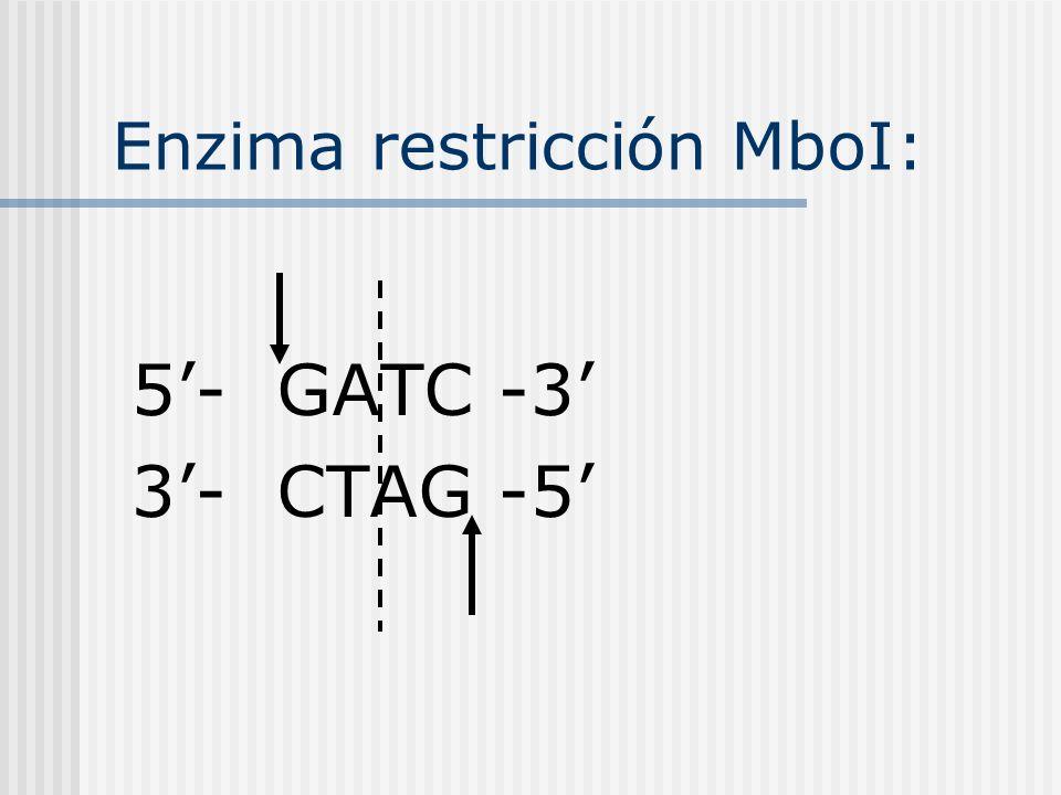 Human cystic fibrosis transmembrane conductance regulator (CFTR) gene, exon 10. ORIGIN 1 cactgtagct gtactacctt ccatctcctc aacctattcc aactatctga atcatg