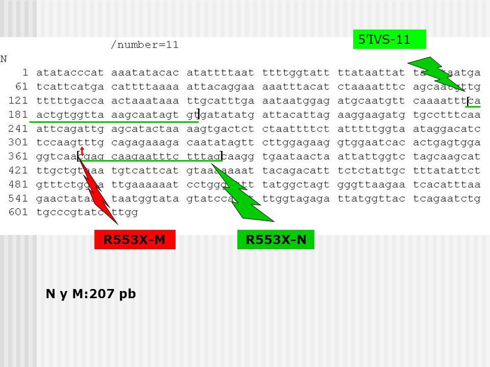 5IVS-11 G551D-M N y M:202 pb a G551D-N